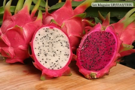 Dragon Fruits For Sale - Special Offer!