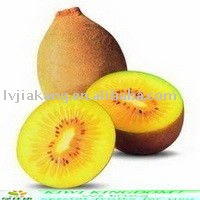 fresh golden kiwi fruit