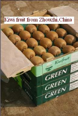 Fresh Kiwi Fruit Dried Kiwi Fruit Products China Fresh Kiwi Fruit Dried Kiwi Fruit Supplier