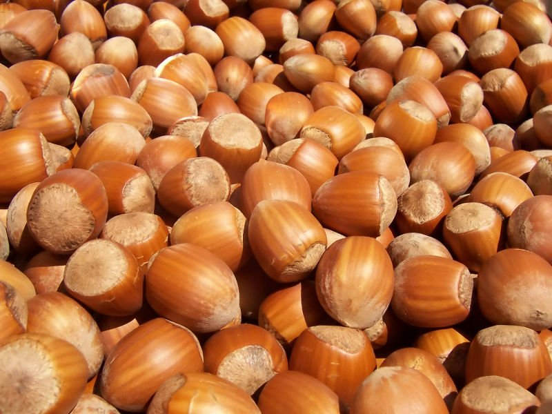 HAZEL nuts at affordable prices