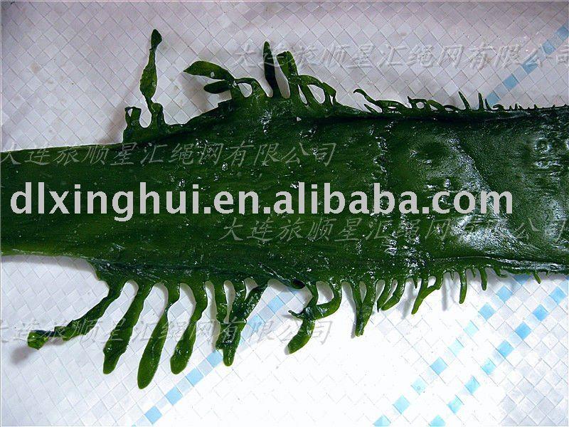 fresh health nori seaweed
