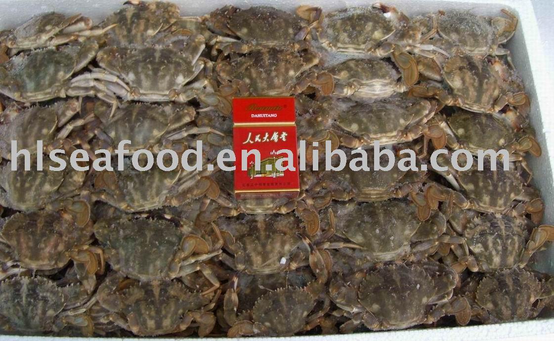 Japanese Stone Crab