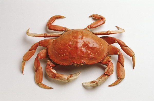 Frozen seafood products china frozen seafood supplier for Best frozen fish to buy at grocery store