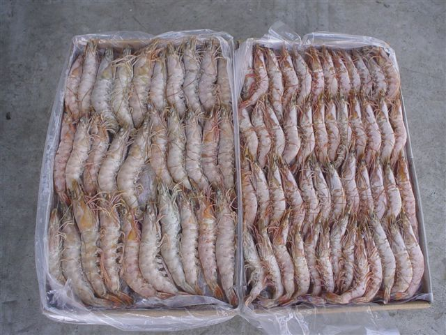 Frozen Mud Crab Sections