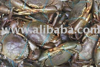 Live Crab from Bangladesh