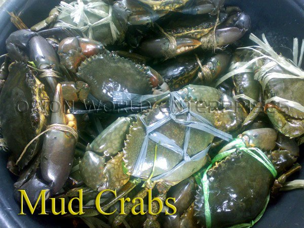 crabs from Philippines suppliers,exporters on 21food.com