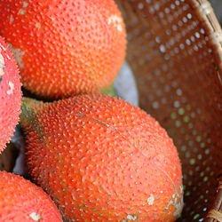 Gac, Momordica Cochichinensis, Fruit From Heaven