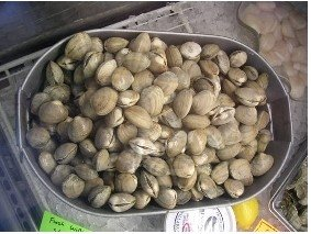 Manilla steamer clams (per pound)