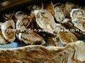 oyster powder