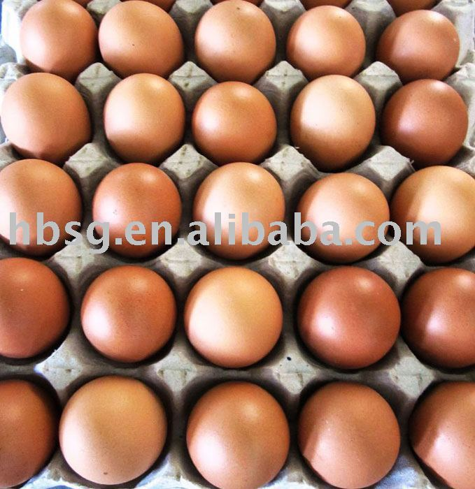 Fresh Chicken Egg
