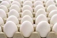 hatching eggs