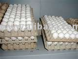 fertile parrot eggs for sale