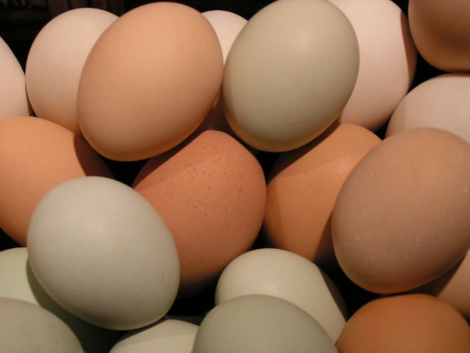 Broiler Fertile eggs/Ross308 Chicken Hatching eggs for sale in ...