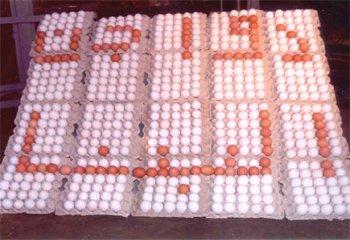 Fresh White Table Eggs