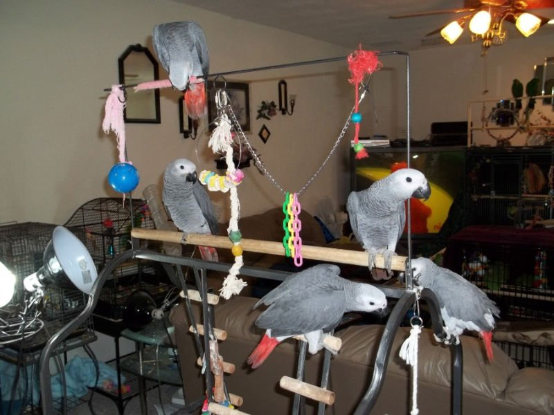 parrot machine for sale