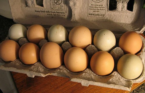 Fertile Chicken Eggs, Fertilized Quail Eggs, Fertile Duck Eggs and Fertile Game Bird Eggs for sale a