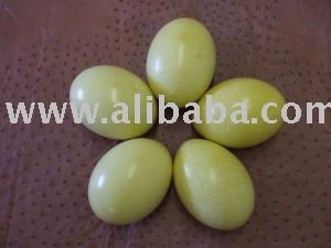 Fresh Rhea Eggs for sale