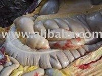 horse lungs and other edible offals for sale offals