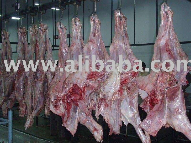 Processed halal cow meat, head, Feet, Leaf fat, Kidneys, Udders, Jowl