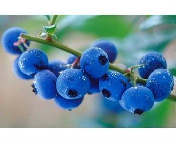 New natural blueberry flavour