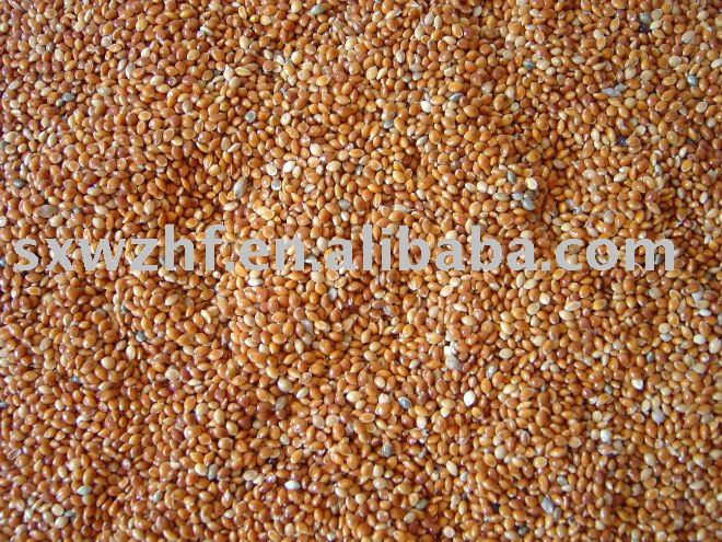 red broom corn millet products,China red broom corn millet supplier