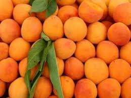 Fresh Apricot (Stone Fruit) For sale