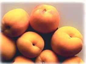 Apricot Pulp