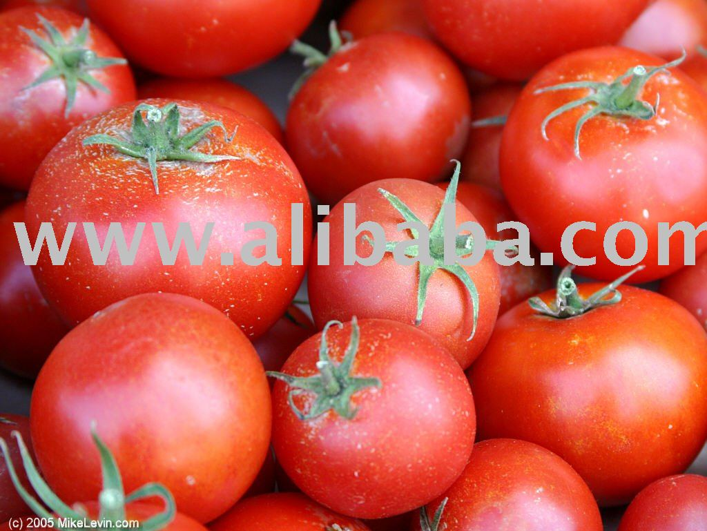Tomato products,India Tomato supplier