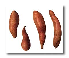 Sweet Potatos (Japan's Seeds)