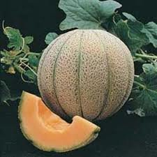 fresh musk melon