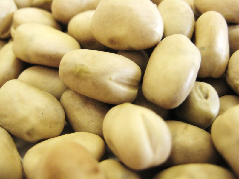 Organic Faba Beans