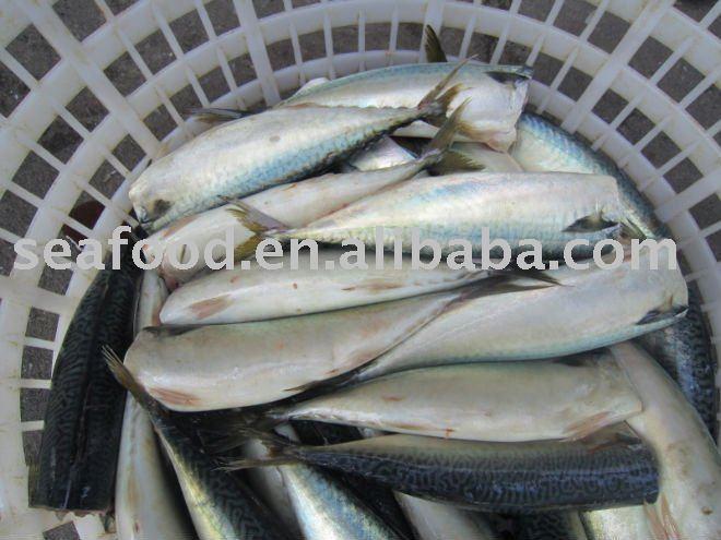 鱼冷冻后可以保存多久