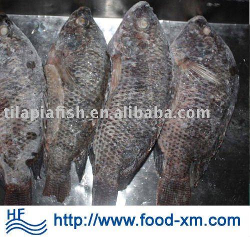 low price black frozen tilapia whole round