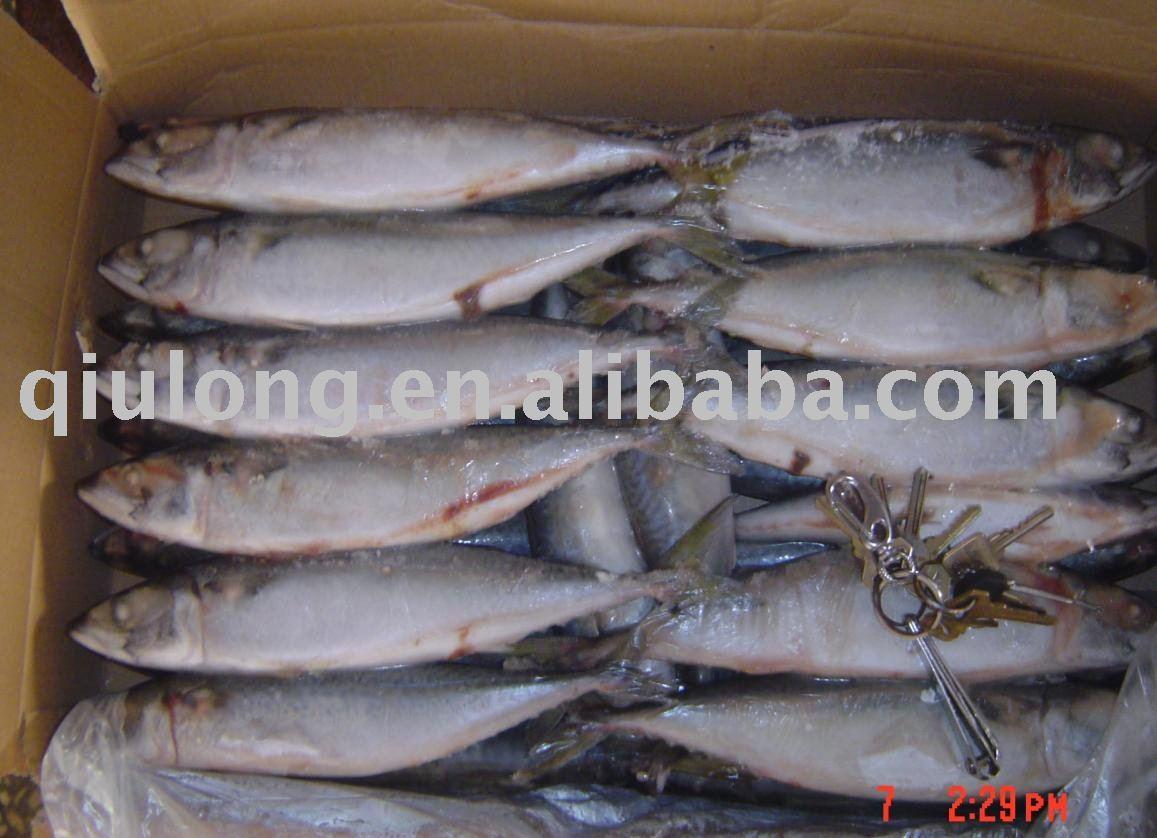 Frozen fish mackerel products china frozen fish for Best frozen fish