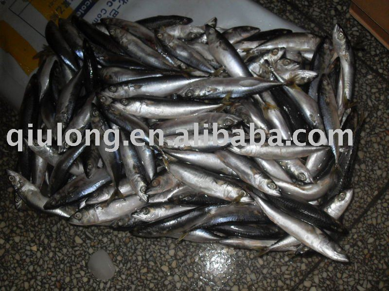 frozen  saba mackerel