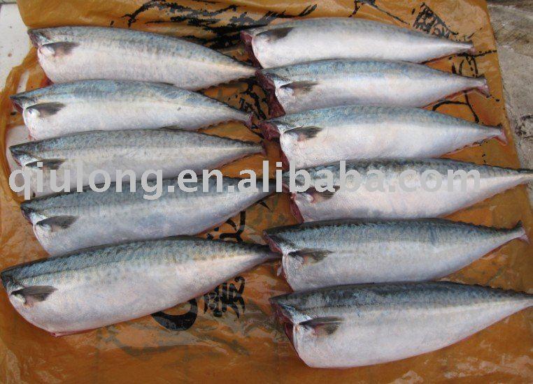 frozen fish(mackerel HG)