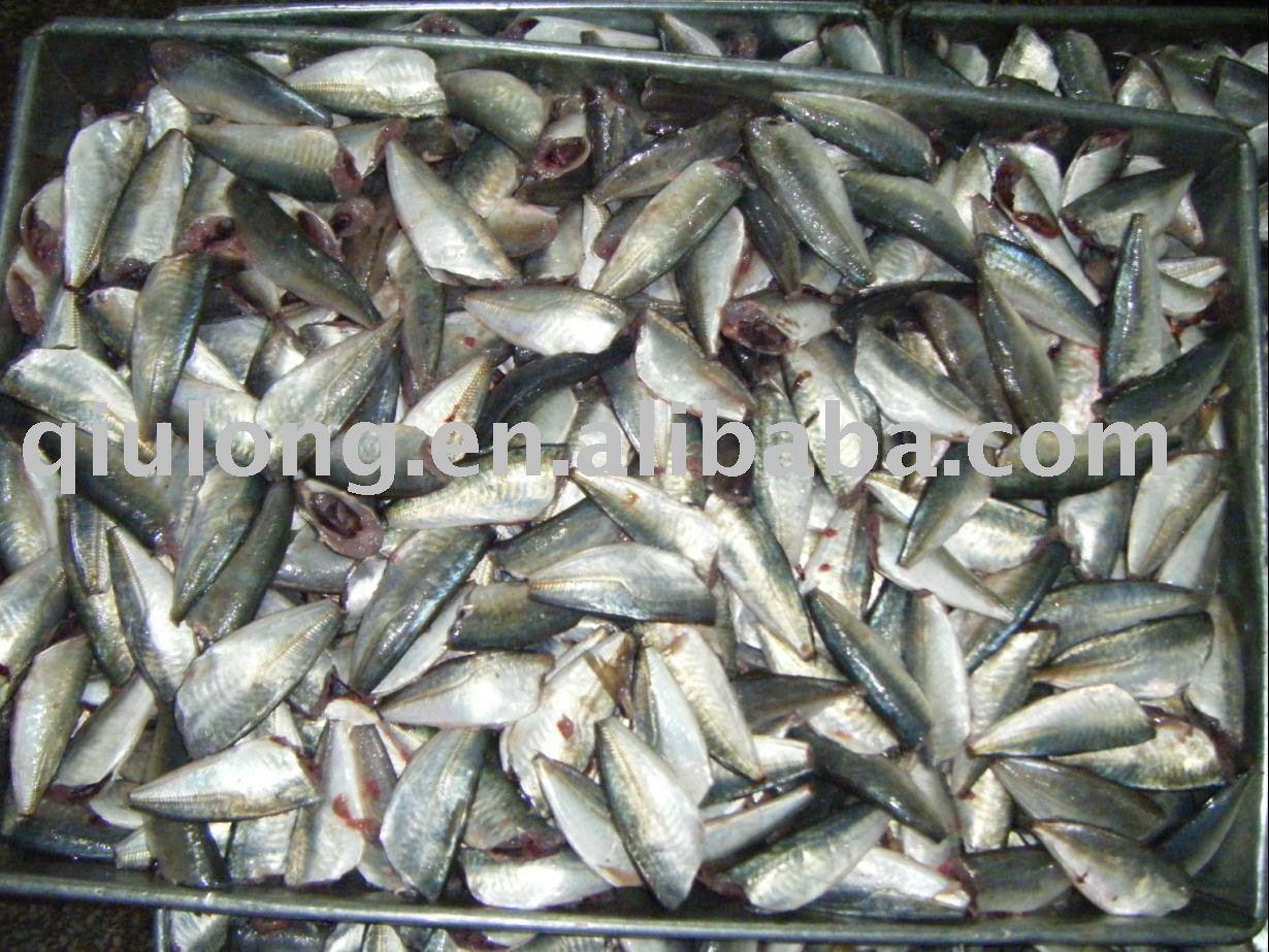 frozen horse mackerel hg