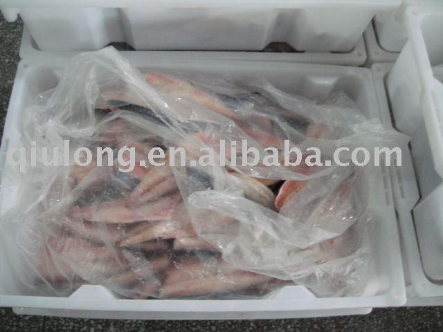frozen scomber scombrus mackerel fillets
