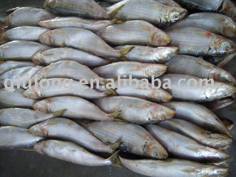 seafood(sardine WR)
