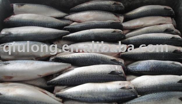 HG frozen mackerel
