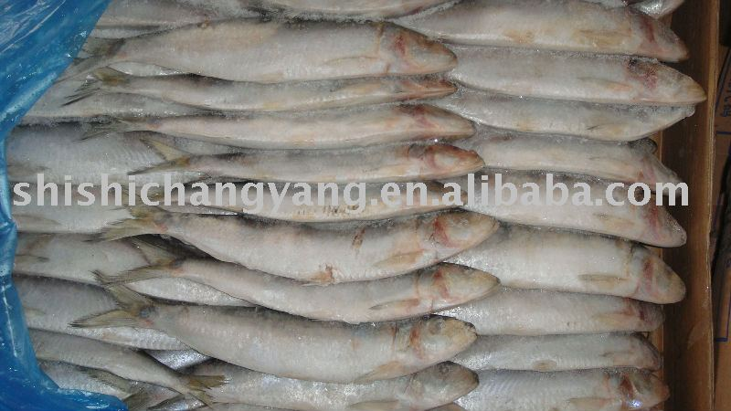 Frozen Sardines(tamban)