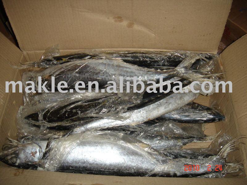 Frozen   fish ,  Spanish   Mackerel