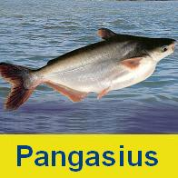 Pangasius fish products thailand pangasius fish supplier for What is pangasius fish