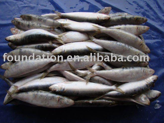 Seafood(frozen sardine)