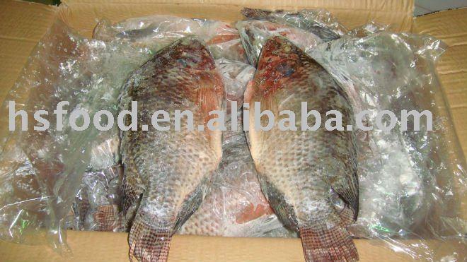 Frozen whole round  tilapia   300 - 500g