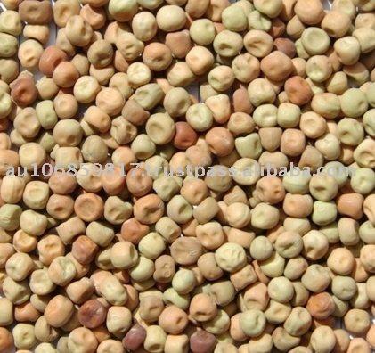 Australian Dun peas field peas parafield peas
