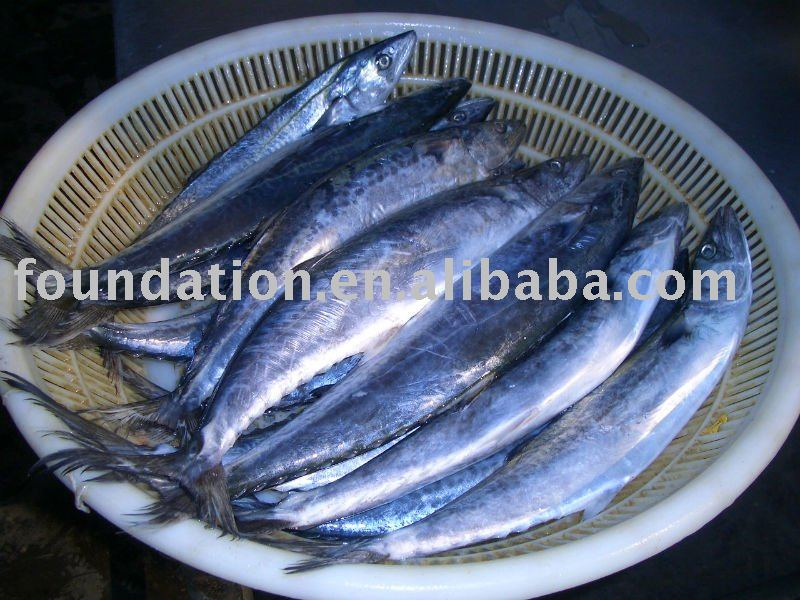 how to prepare fresh mackerel