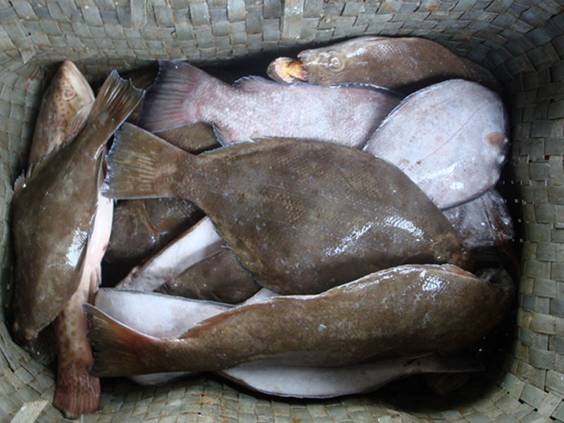Live flounder fish products korea live flounder fish supplier for Picture of a flounder fish