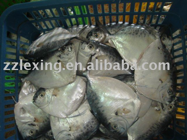 Moonfish products norway moonfish supplier for Opah fish price