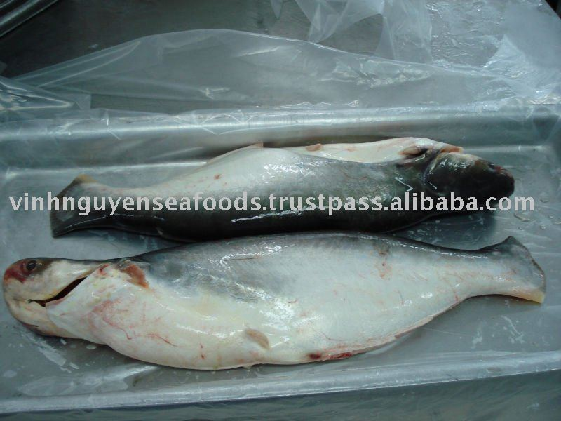 Frozen pangasius basa fish catfish swai fish seafood for Is it safe to eat swai fish